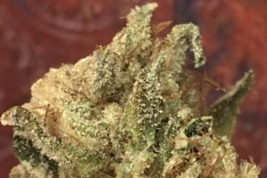 Hemp bud up close showing Terpenes