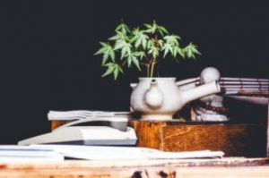 Hemp planted in white tea pot on books
