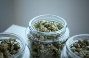 Three glass jars of medical cannabis